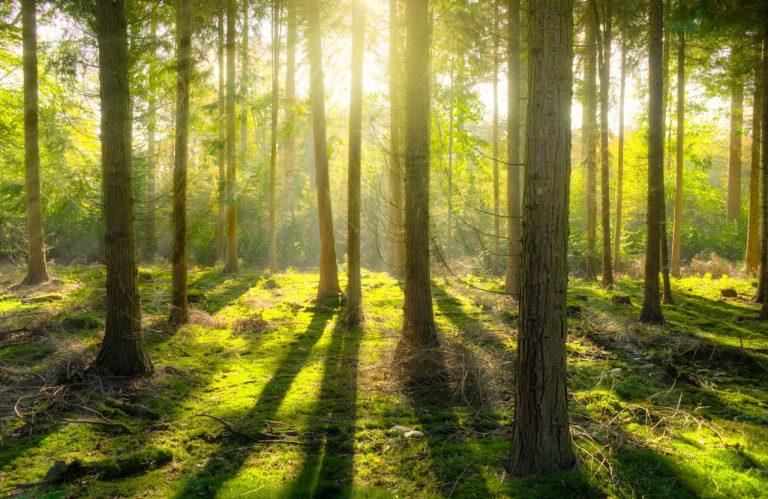 Reiten in Wald und Feld: Neues Landesnaturschutzgesetz NRW